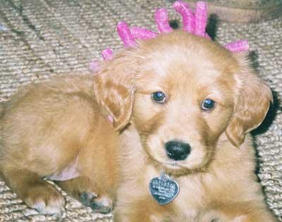 Sienna puppy
